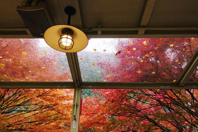 Little Old Train in Autumn Maple